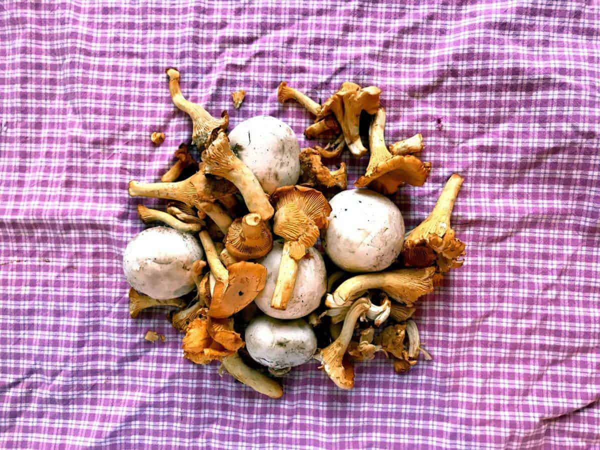 White button mushrooms and chanterelles on checkered white and pink surface